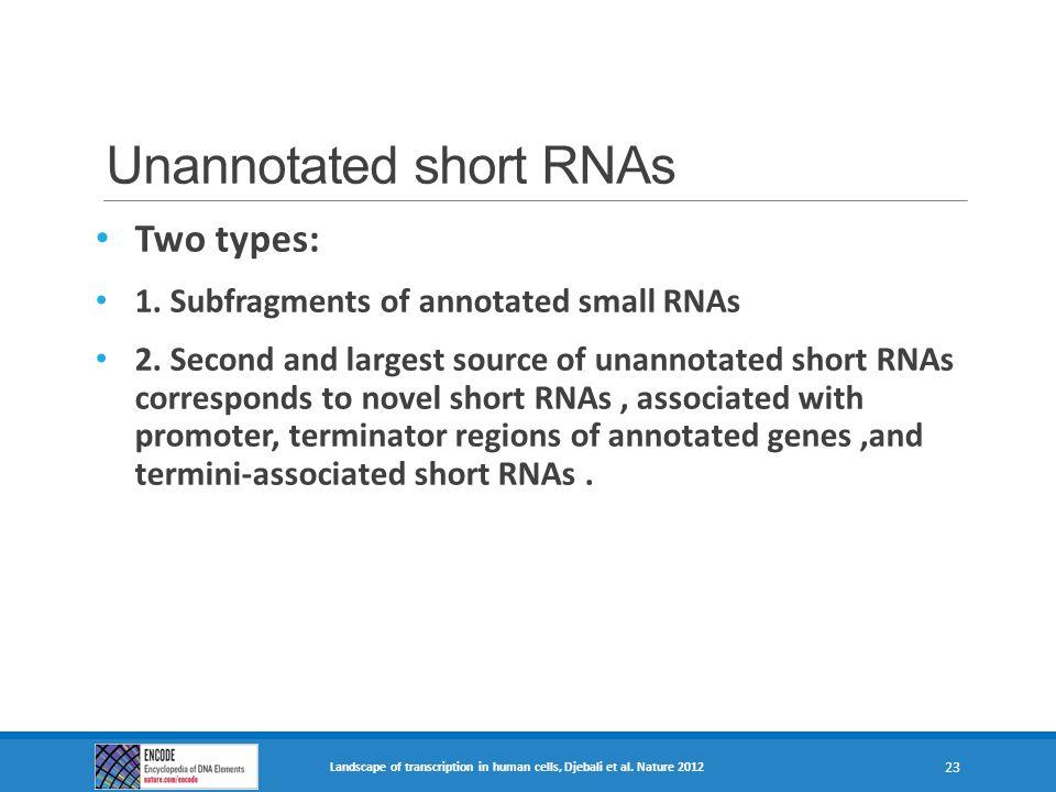 Unannotated short RNAs