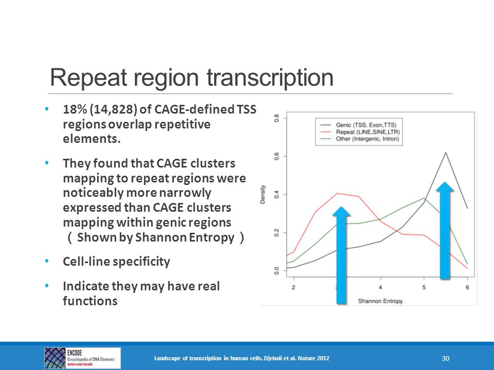 Repeat region transcription