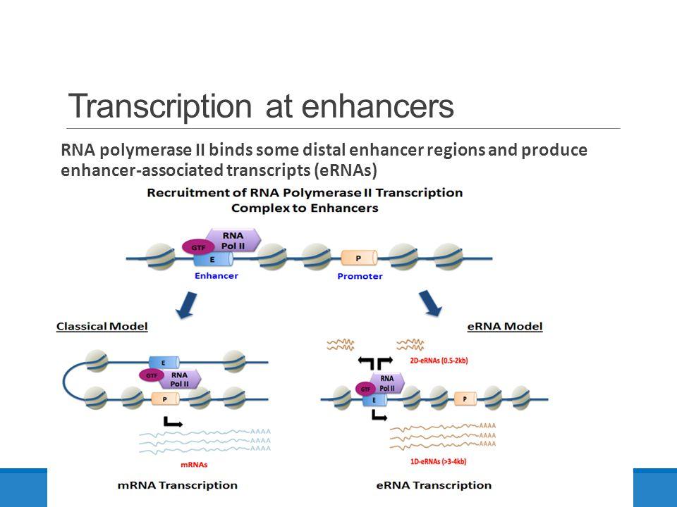 Transcription at enhancers