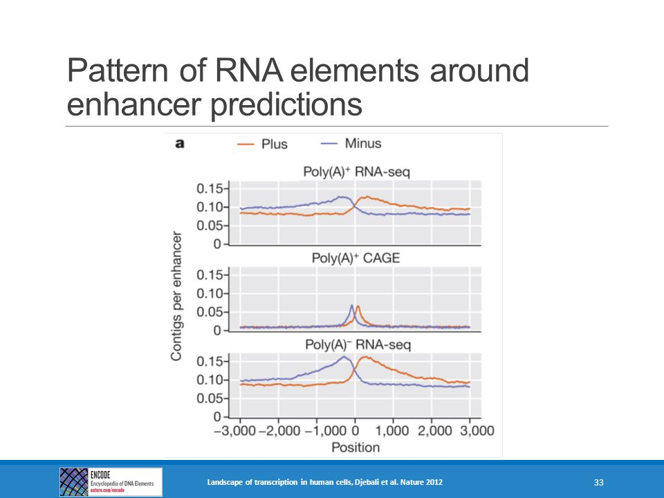 Pattern of RNA elements around enhancer predictions