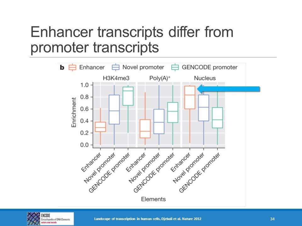 Enhancer transcripts differ from promoter transcripts