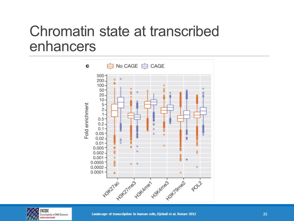 Chromatin state at transcribed enhancers