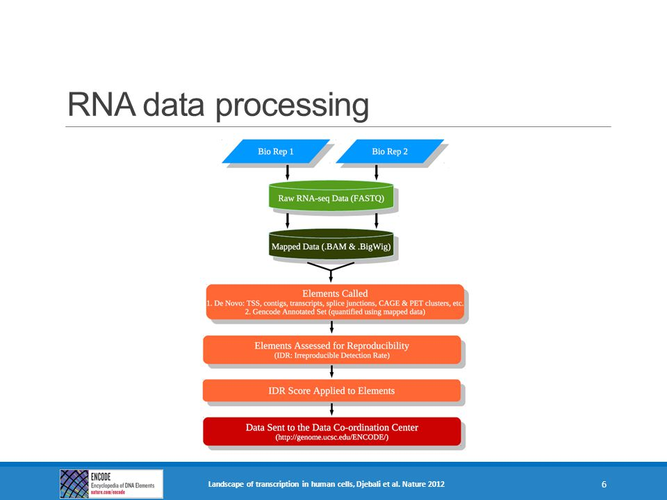 RNA data processing Raw read data (FASTQs) from each biological replicate is independently mapped against the hg19.