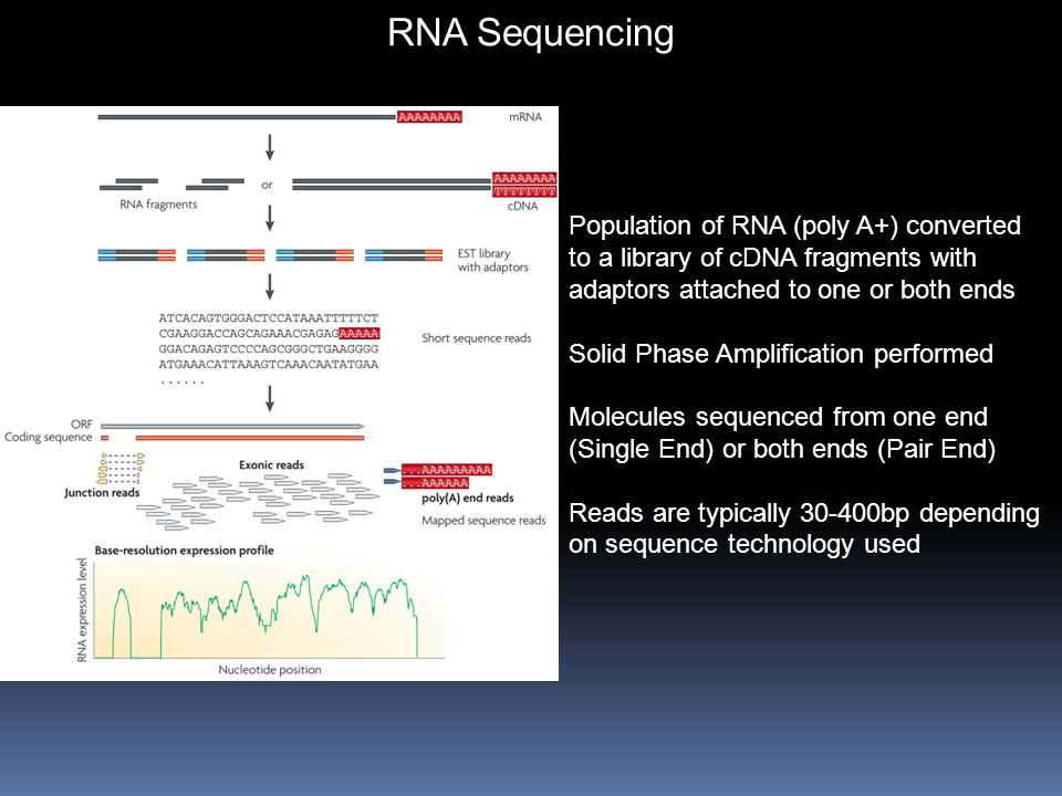 RNA Sequencing Population of RNA (poly A+) converted to a library of cDNA fragments with adaptors attached to one or both ends.