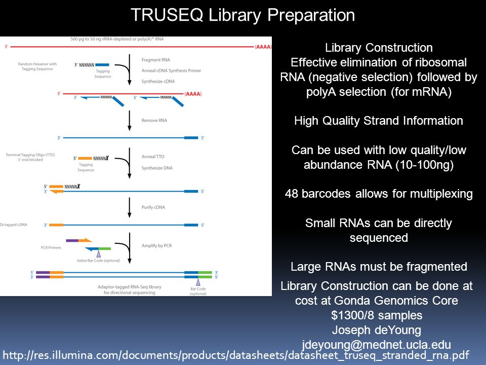 TRUSEQ Library Preparation