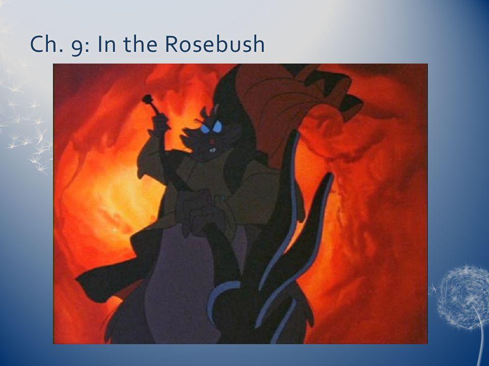 Ch. 9: In the Rosebush