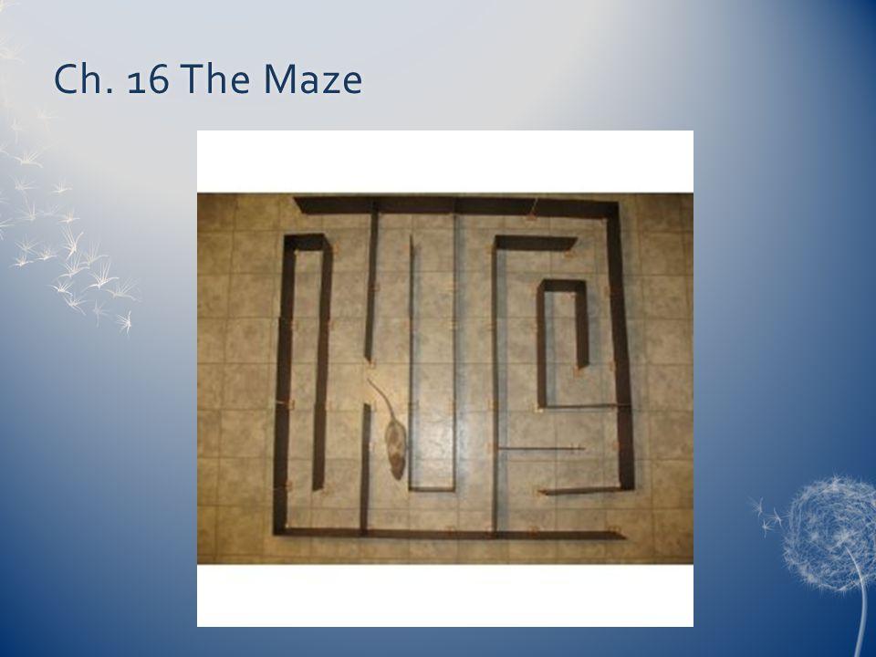 Ch. 16 The Maze