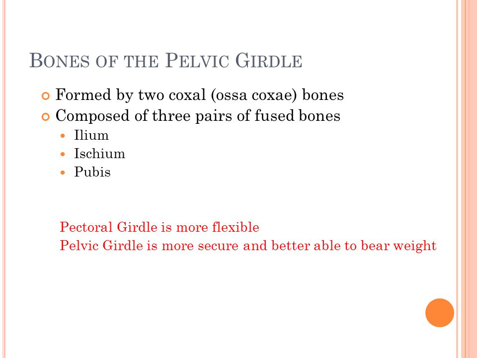 Bones of the Pelvic Girdle