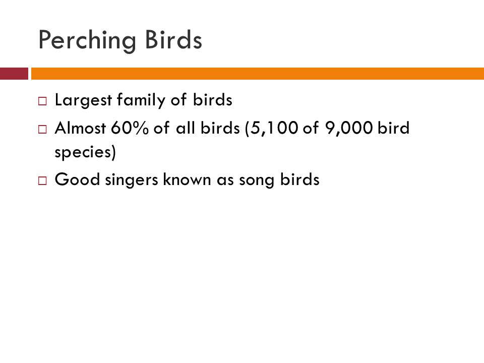 Perching Birds Largest family of birds