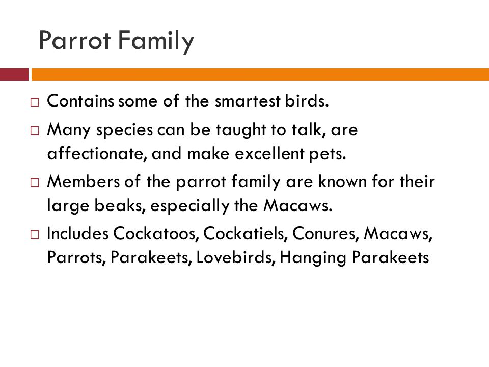 Parrot Family Contains some of the smartest birds.