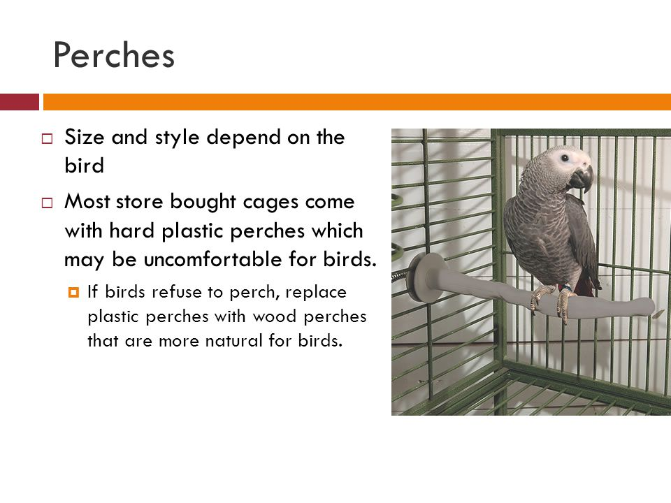 Perches Size and style depend on the bird