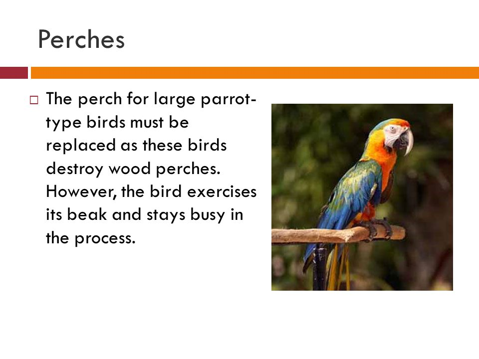 Perches