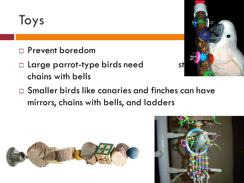 Toys Prevent boredom. Large parrot-type birds need stainless-steel chains with bells.