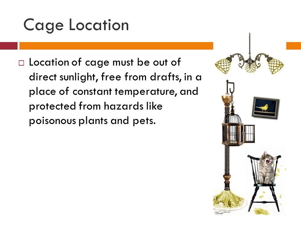 Cage Location
