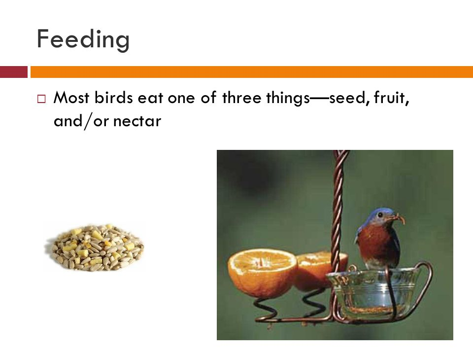 Feeding Most birds eat one of three things—seed, fruit, and/or nectar