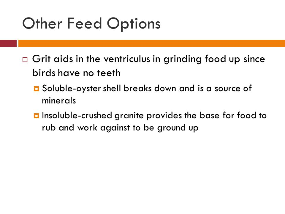 Other Feed Options Grit aids in the ventriculus in grinding food up since birds have no teeth.