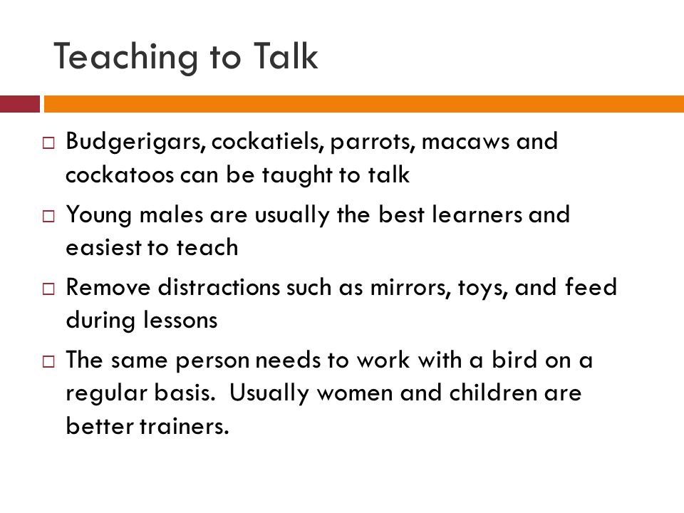 Teaching to Talk Budgerigars, cockatiels, parrots, macaws and cockatoos can be taught to talk.
