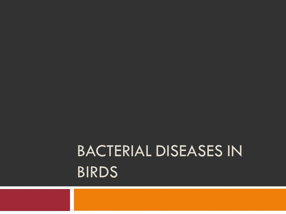 Bacterial Diseases in Birds