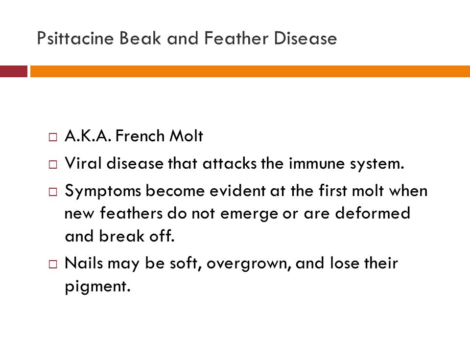 Psittacine Beak and Feather Disease