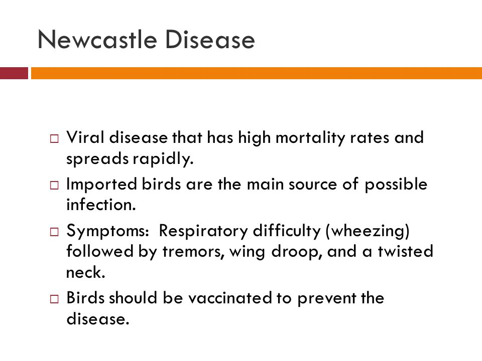 Newcastle Disease Viral disease that has high mortality rates and spreads rapidly. Imported birds are the main source of possible infection.