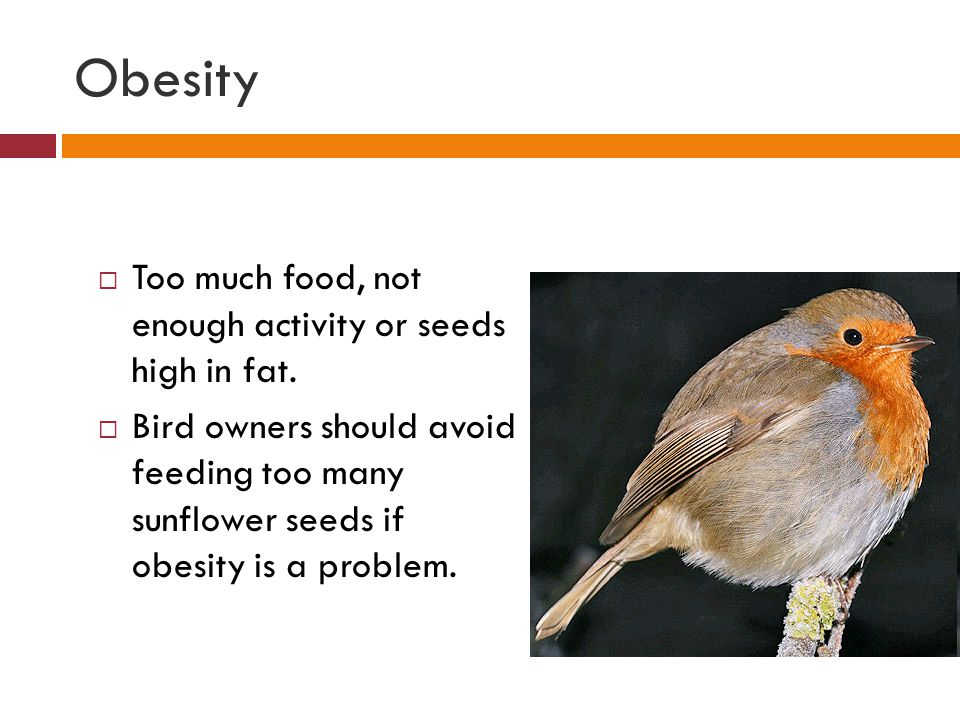 Obesity Too much food, not enough activity or seeds high in fat.