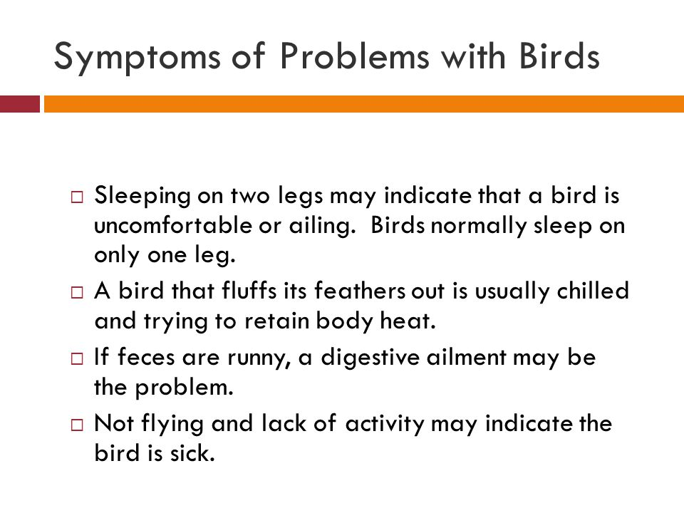 Symptoms of Problems with Birds