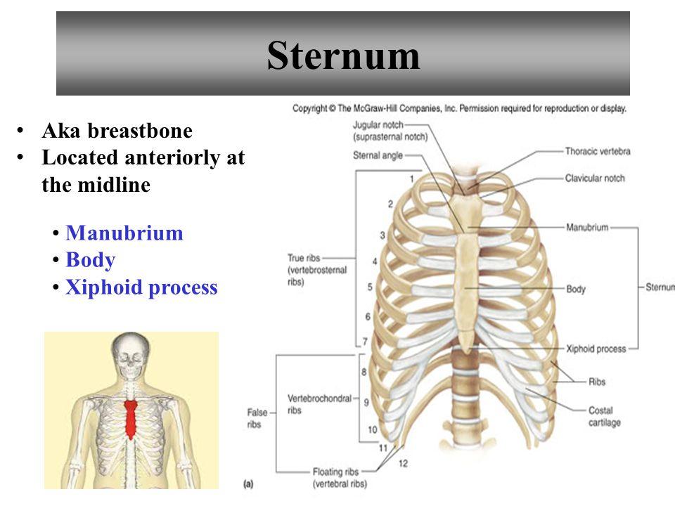 Sternum Aka breastbone Located anteriorly at the midline Manubrium