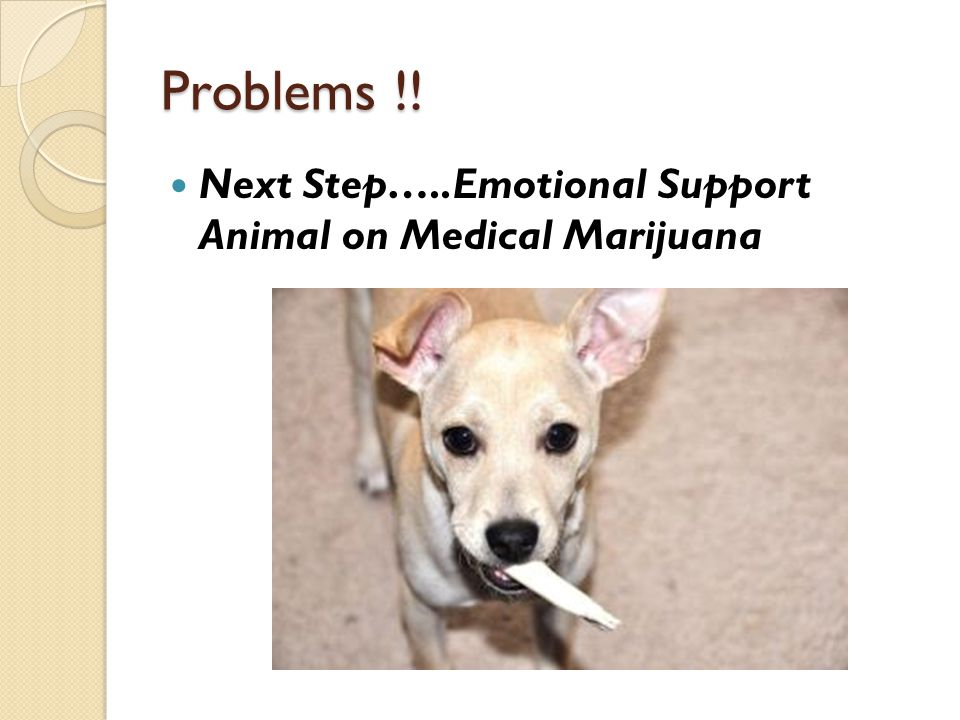 Problems !! Next Step…..Emotional Support Animal on Medical Marijuana