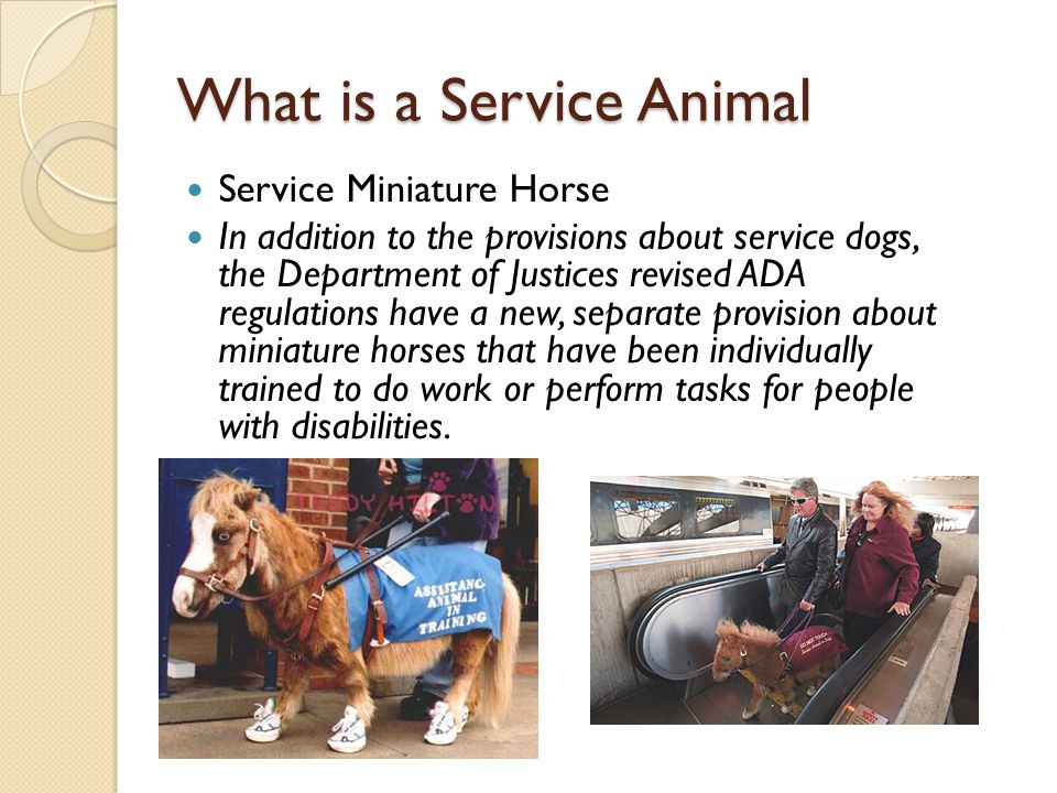 What is a Service Animal