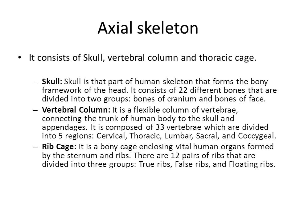 Axial skeleton It consists of Skull, vertebral column and thoracic cage.