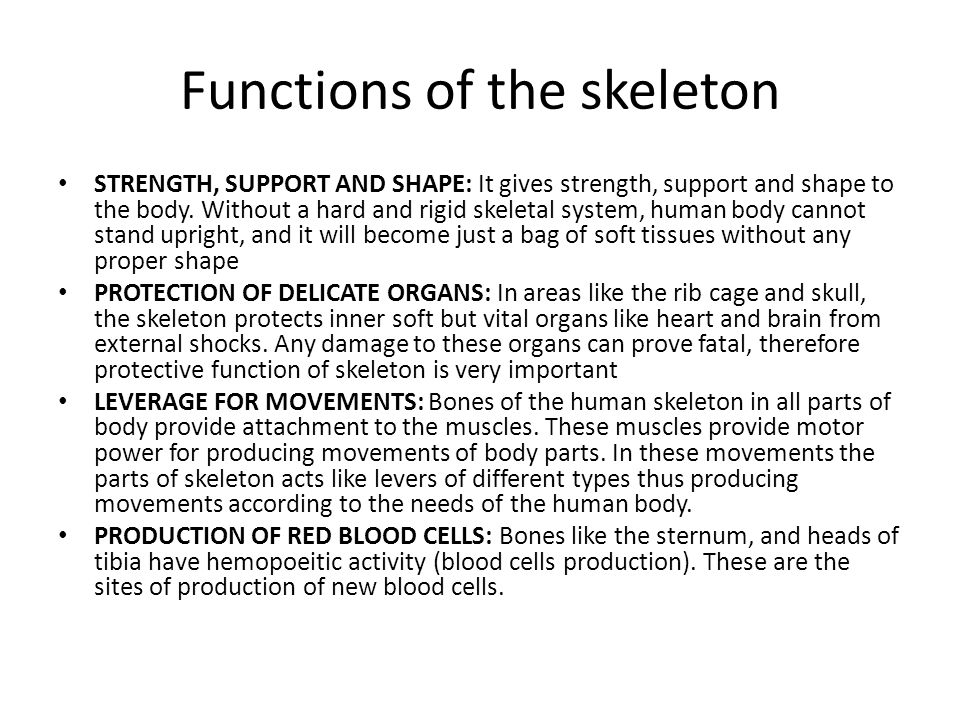 Functions of the skeleton