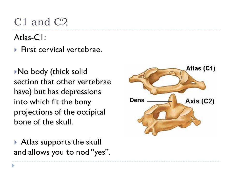 C1 and C2 Atlas-C1: First cervical vertebrae.