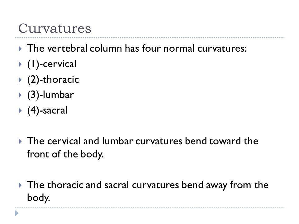 Curvatures The vertebral column has four normal curvatures: