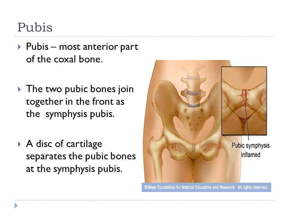 Pubis Pubis – most anterior part of the coxal bone.