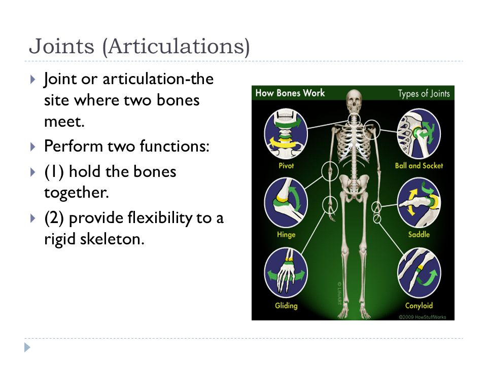 Joints (Articulations)