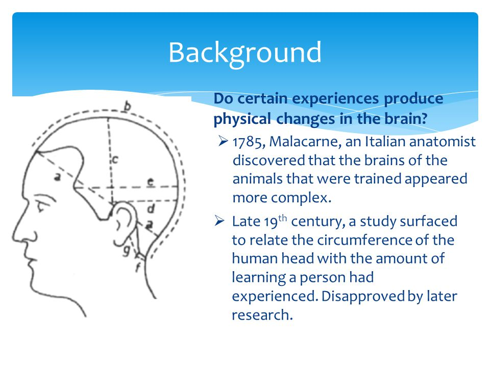 Background Do certain experiences produce physical changes in the brain