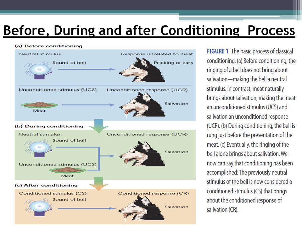 Before, During and after Conditioning Process