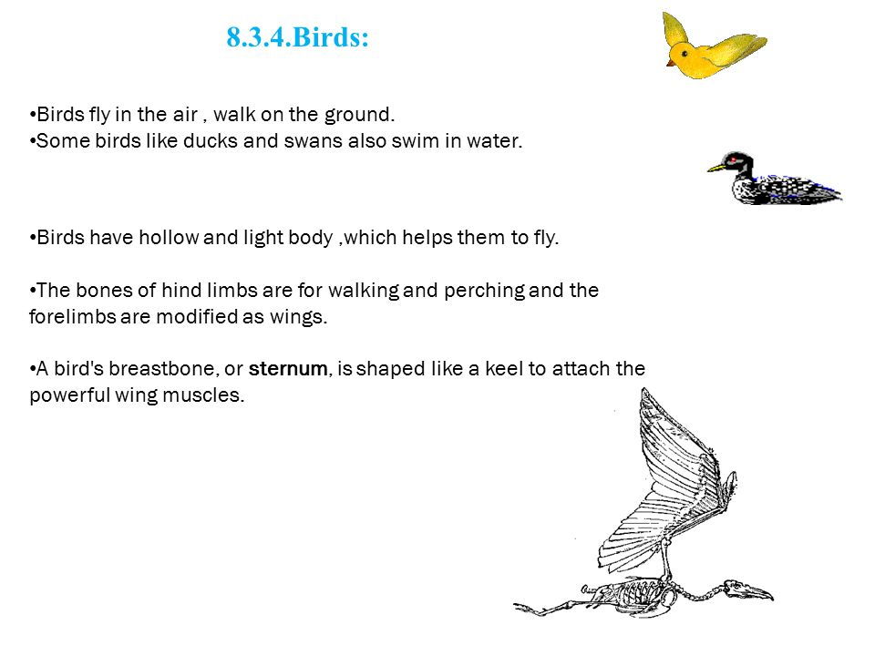 8.3.4.Birds: Birds fly in the air , walk on the ground. Some birds like ducks and swans also swim in water.