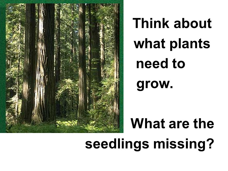 Think about what plants need to grow. What are the seedlings missing