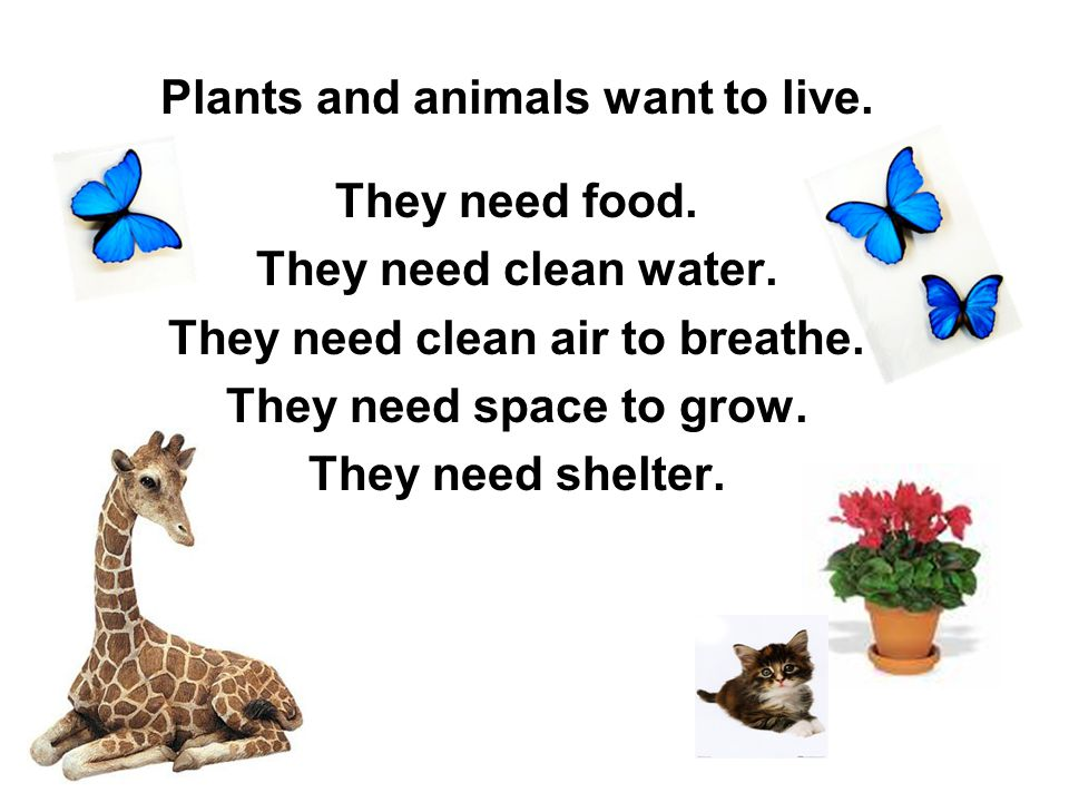 Plants and animals want to live. They need clean air to breathe.