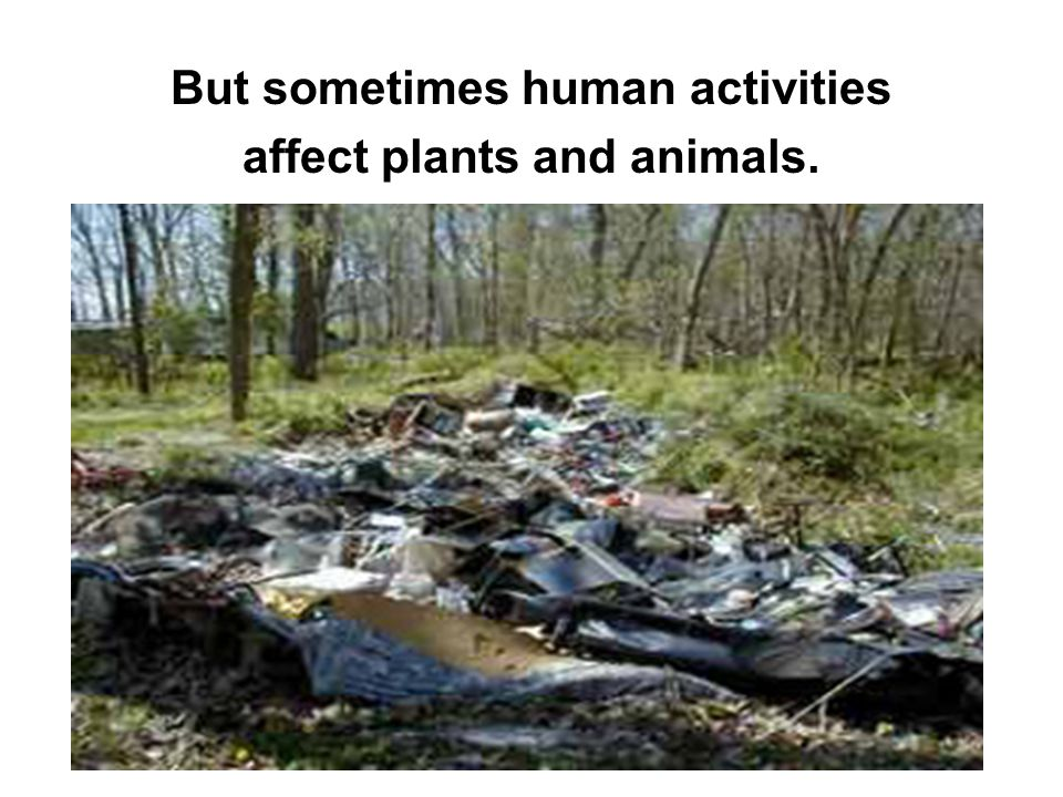 But sometimes human activities affect plants and animals.