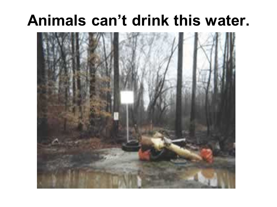 Animals can't drink this water.