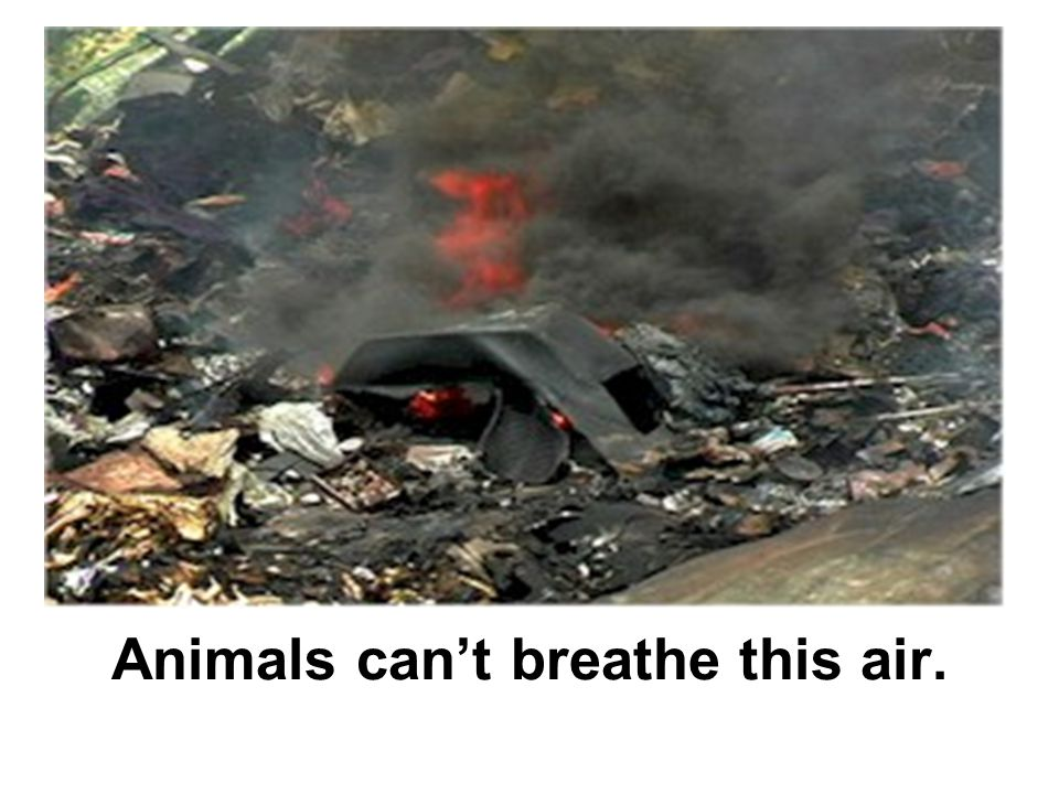 Animals can't breathe this air.