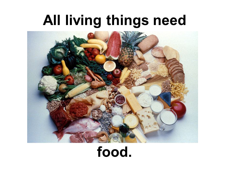 All living things need food.
