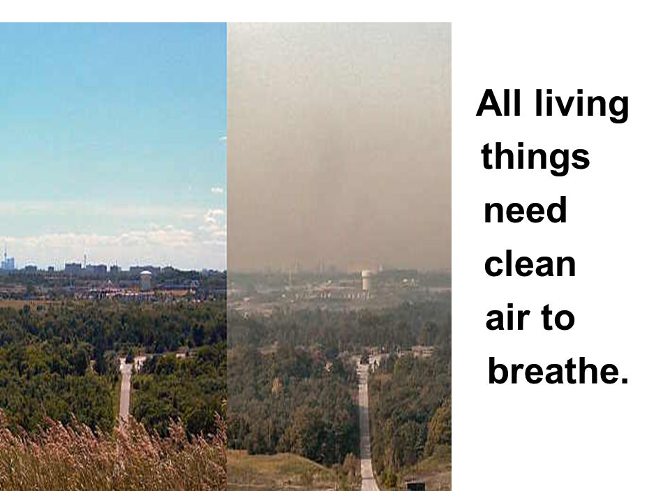 All living things need clean air to breathe.