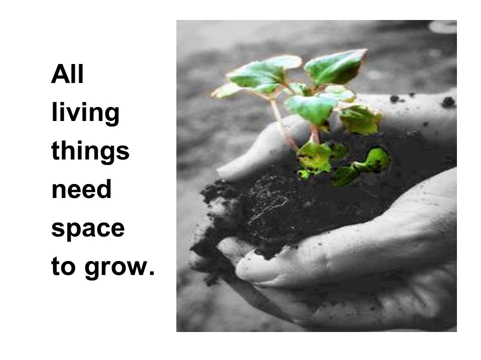 All living things need space to grow.