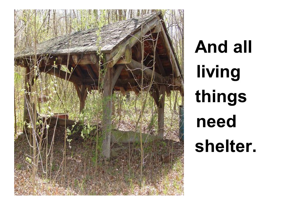 And all living things need shelter.