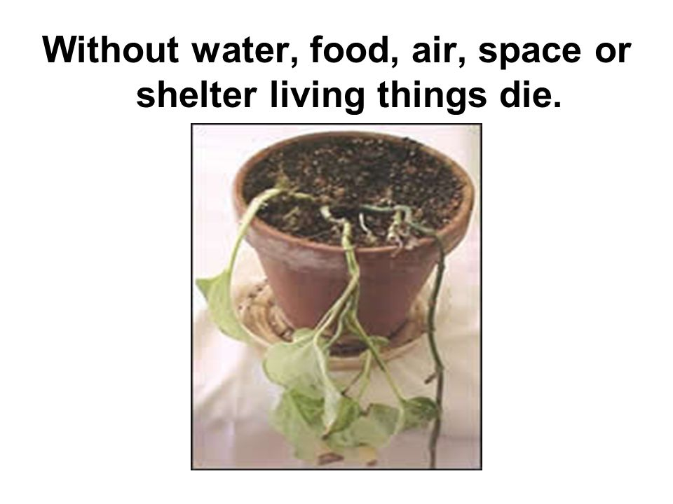 Without water, food, air, space or shelter living things die.