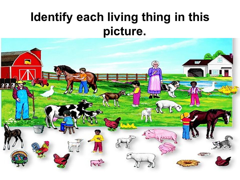 Identify each living thing in this picture.