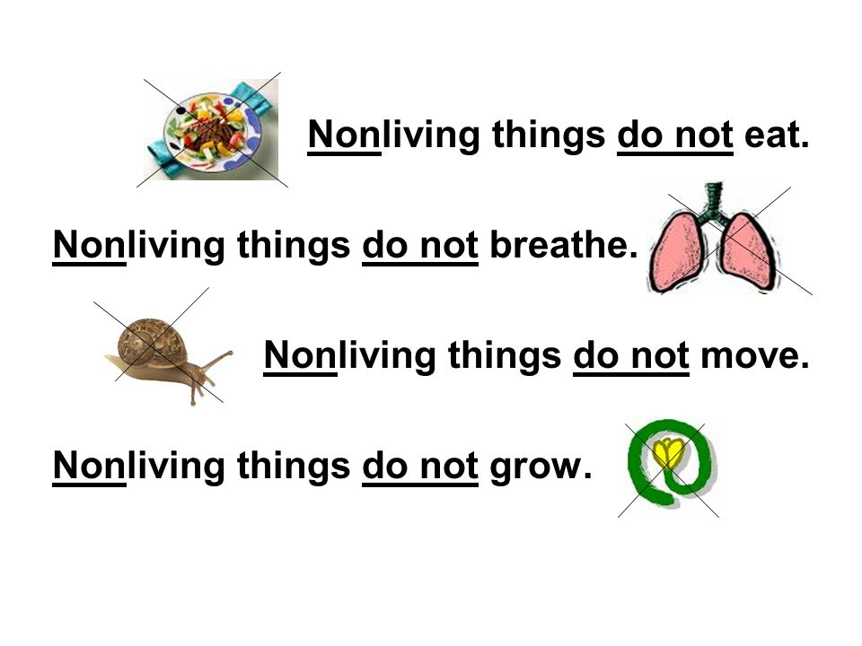 Nonliving things do not eat.